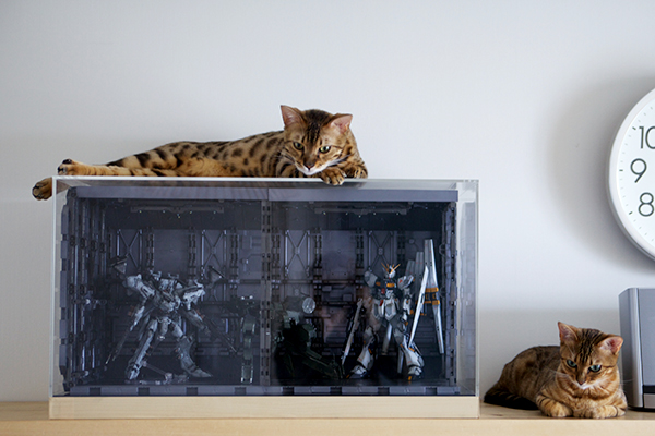 ホワイトグリント、メタルギアREX、νガンダム、ベンガル猫×2