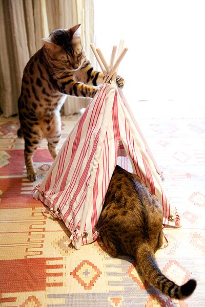 DULTON  CAT TIPI キャット テント