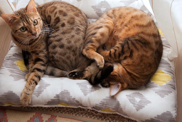 猫とインテリア necoto. さんの猫用ベッド